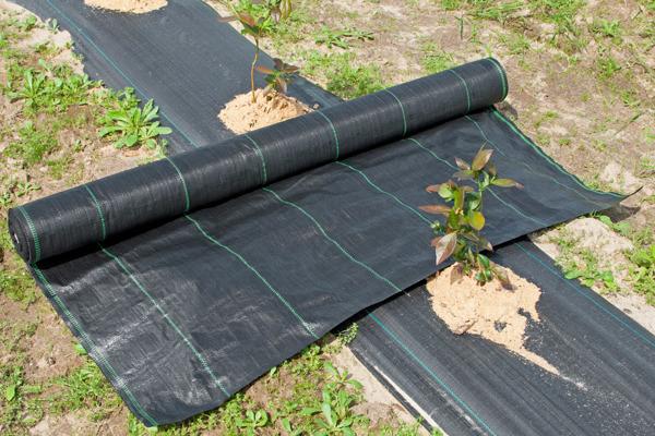 AGROTKANINA MATA  2,0x100m 200 cm 90g/m2 UV Czarna